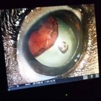 ビートの眼科初診終わりました。