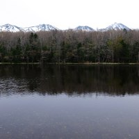 知床五湖の春景色