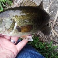 やっぱりこの釣りが好きだな~