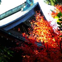 『旧吉田邸』 紅葉狩り