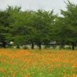 古代都市 「藤原宮跡に咲く花々」