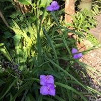 今朝の庭と夢の話