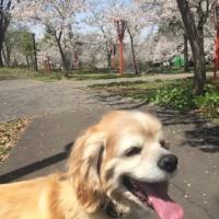今日は歩いて大井田の郷公園に