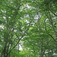 6月22日  新緑の森