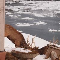流氷と落石その2