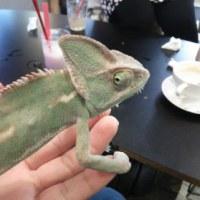 写真☆彡爬虫類カフェ☆