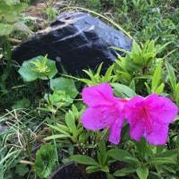 5月、この時期の花と若葉が美しい その1