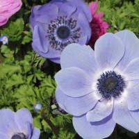 名知らずの花
