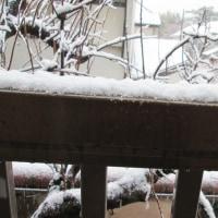 府中 でも雪です!