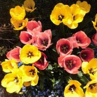 春の恵みの……