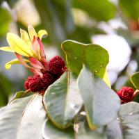 愛知県緑化センター季節の花めぐり