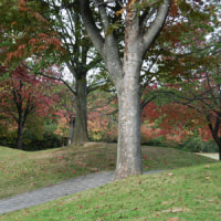 訪問活動で秋を満喫