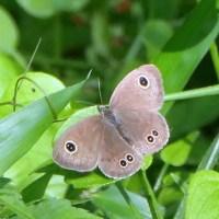 比企の里・・・嵐山町・・・菅谷館跡・蝶の里公園・・・蝶に逢いたくて徘徊