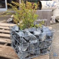 ガビオン+小ロッカリー+植栽