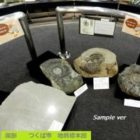 アンモナイトを掘り起こせ!? -つくば市 地質標本館-