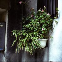 大阪街物語231