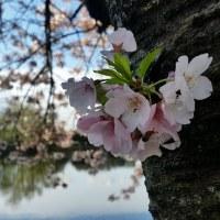 今週末は熊本復興支援物産展が開催されます!