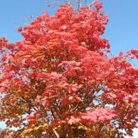 今年の秋の紅葉は・・・