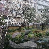 東京散歩~湯島