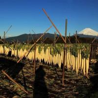 富士山 「 ちょっと...  時季を逃したのかと... エッイャー!  行こう ! ! 」