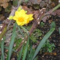 まだかな~、花の春。