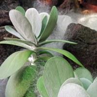 咲くやこの花館 12月1日