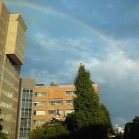 虹を見る。