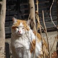 2017年3月4日 お雛様、猫