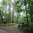 森を愉しむ土地!
