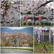 真田丸の九度山町の桜は、意外に残っていました