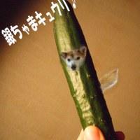 お散歩銀座☆