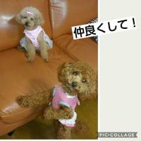 ズッキーニミニ丸グリーン初収穫と雨の日の犬たち!