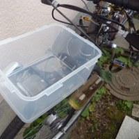 ランドローバー(自転車)のBOXを復活させよう。その1