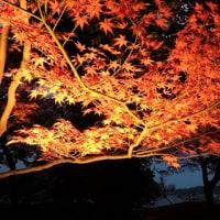 鎌倉長谷寺、紅葉ライトアップ2016 その1