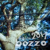 【bozzo.jp】賀来神社の大樹