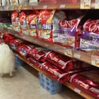 「ひごペット」でお買い物