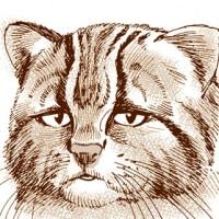 【長崎県公式】 観光・グルメ情報のHPに登場! 【アンゴルモア 元寇合戦記】