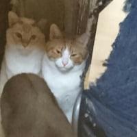 ウチ猫たち2