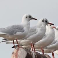 荒川野鳥調査でした