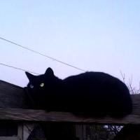 日暮れ時の猫。