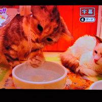 2/23 生き物に 猫にも右きき、左利きがあるそうで