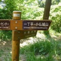 健康登山<7日目>