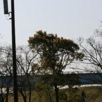 Ю  新緑&どこかキリッとしている、シメの姿 Ю KK楽園(岐阜県各務原市)