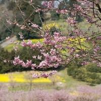 篠窪、春の小箱。