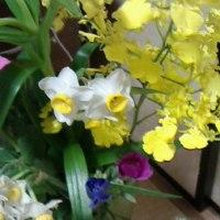 初春の花!