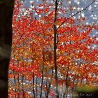 木村 肇 作品集 紅葉 白駒湖 【長野県佐久市】-16.10.10