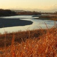 枯草の原になりました…多摩川冬景色シリーズ