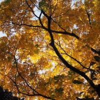 目黒の自然教育園 1 色々な紅葉