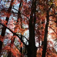 山岳点景:緋色の森
