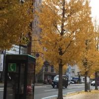 紅葉、黄葉